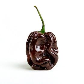 Piment Congo pepper